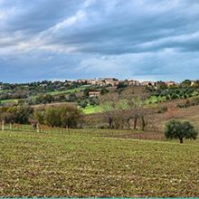 Falconara sole, mare e le colline del vino